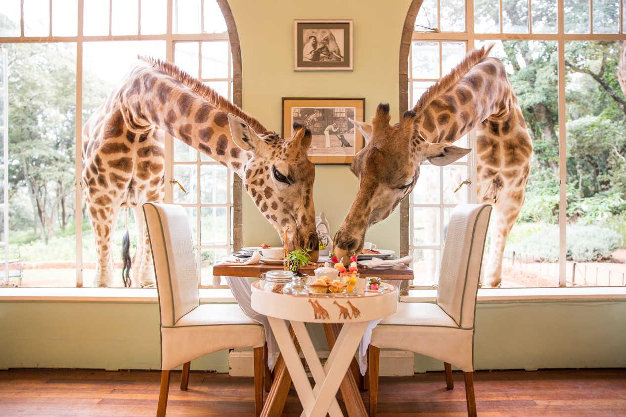 The Giraffe Manor