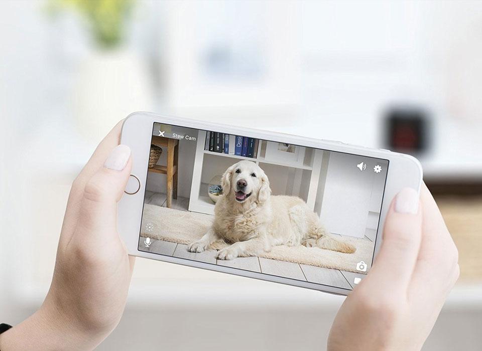Pet Camera - Petcube